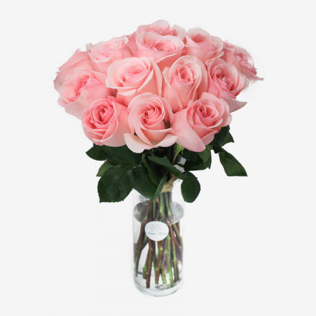 18 Novia Light Pink Roses Bouquet