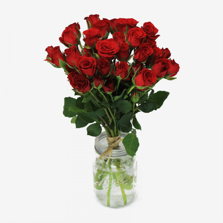 Mikado Red Spray Rose Flower Bouquet (10 stems)