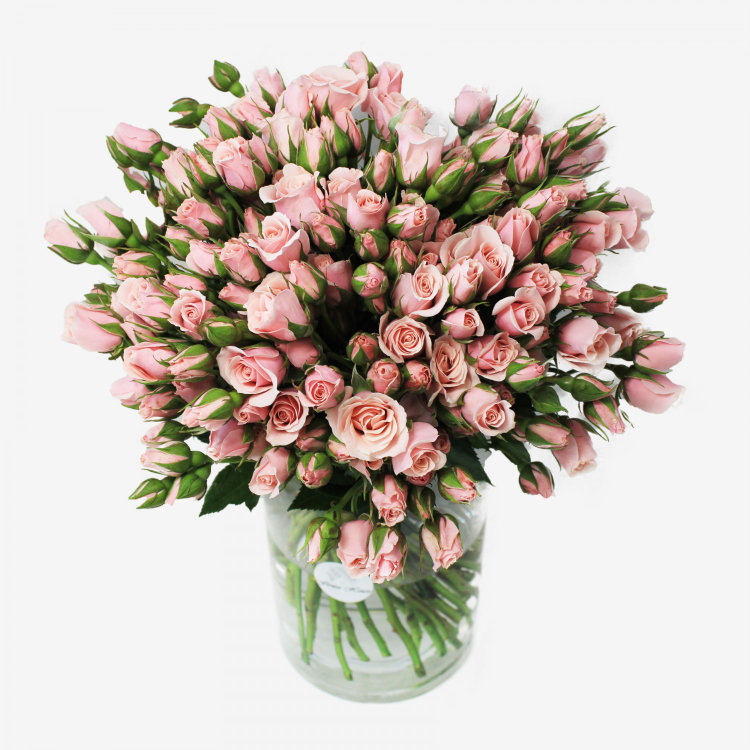 Majolika Light Pink Spray Rose Flower Bouquet (50 stems)