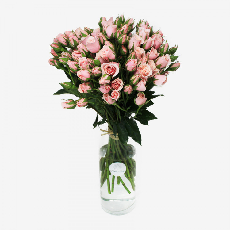 Majolika Light Pink Spray Rose Flower Bouquet (30 stems)
