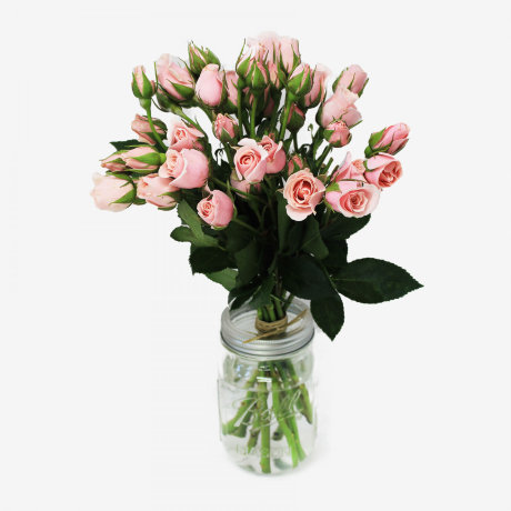 Majolika Light Pink Spray Rose Flower Bouquet (10 stems)