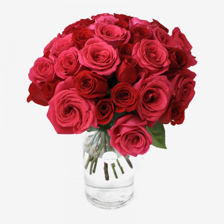 36 Red Freedom & Pink Floyd Roses Bouquet
