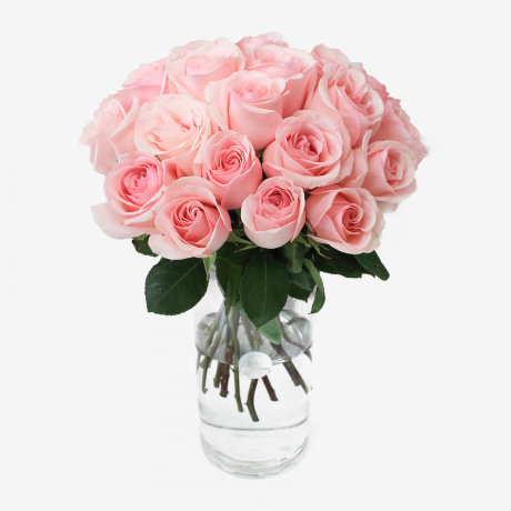 25 Novia Light Pink Roses Bouquet